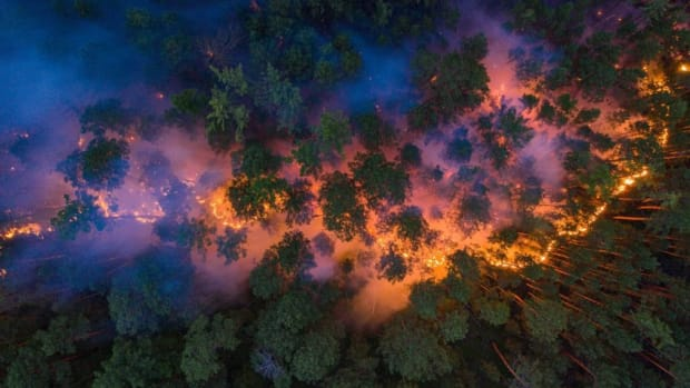 wildfire-1000x600
