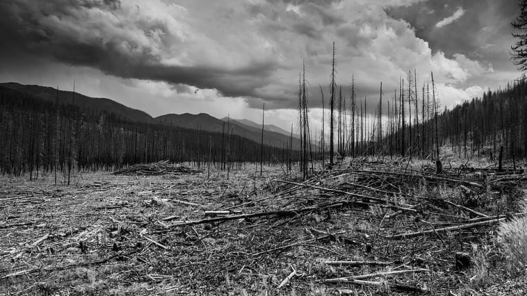 West Coast Wildfires Highlight Forests Are Dying
