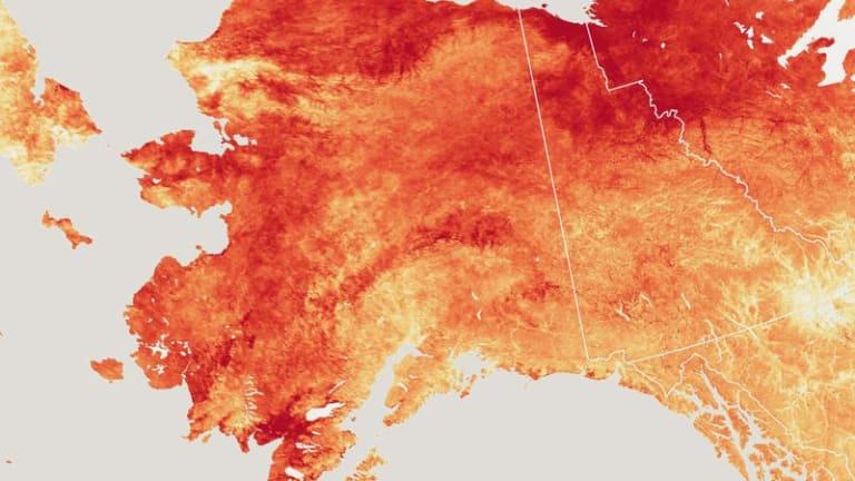 Record-Breaking Heat in Alaska Wreaks Havoc on Communities and Ecosystems
