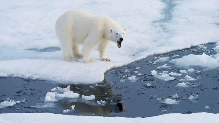 The Arctic Ocean Has Chlamydia