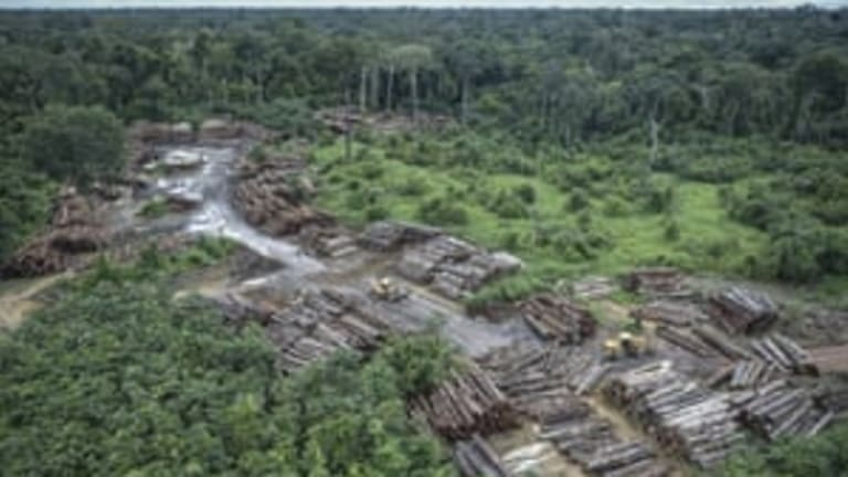 Amazon deforestation accelerating towards unrecoverable 'tipping point'