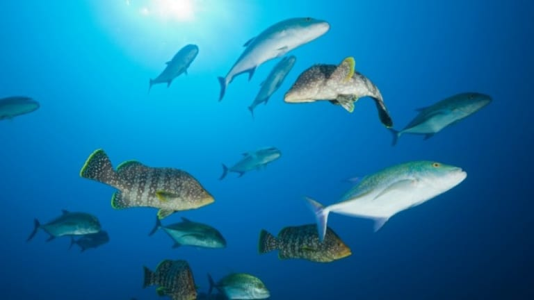 New Report: Ocean Oxygen Loss Makes Acting on the Climate Critical, Now
