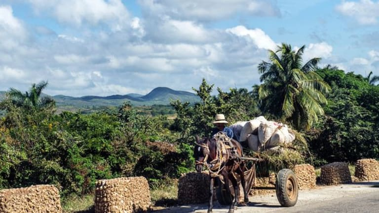 Nature: Cuba's rivers run clean after decades of sustainable farming